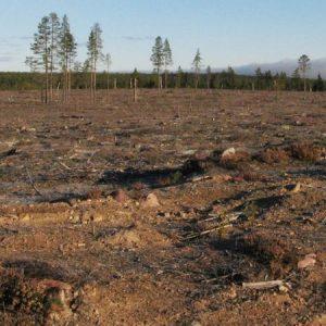 Skogsbränsle är varken miljövänligt eller klimatneutralt